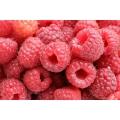 Ahududu fidanı -Raspberries !!! STOKTA YOK!!!